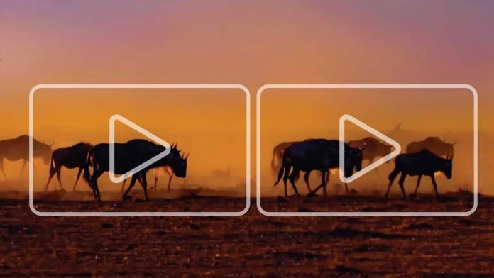 Stock Media: cómo encontrar y utilizar las mejores fotos, videos, música y más